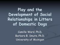 Play and the Development of Social Relationships in Litters of Domestic Dogs icon