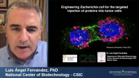 Engineering E. coli for the Targeted Injections of Proteins into Tumor Cells icon
