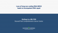 Loss of long non-coding RNA MEG3 leads to incompetent DNA repair icon