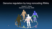 Genome Regulation by Long Noncoding RNAs icon